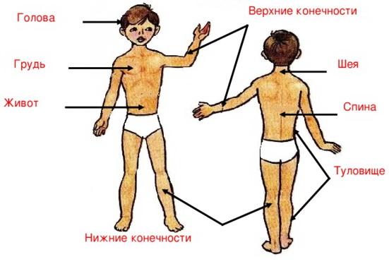 http://prezentacii.info - Слова, из которых состоит человек