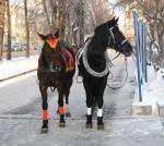 В центре Екатеринбурга. - Фото: Пресс-центр ЗоВУ, 2013.