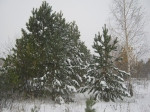 Уральская зима. - Фото: Пресс-центр ЗоВУ. 2014