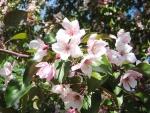 Весна! Природа оживает! – Фото: Пресс-центр ЗоВУ, 2012