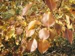 Шоколадные листья осени