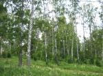 Южный Урал. - Фото: Пресс-центр ЗоВУ, 2012