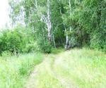 Трава, кусты, деревья. - Фото: Пресс-центр ЗоВУ. 2013г.